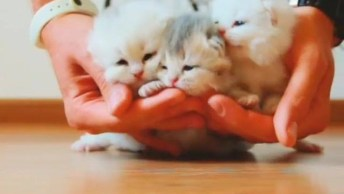 Três Filhotinhos De Gatos Mais Fofos Que Verá Hoje, Como Não Amar?