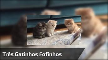 Três Gatinhos Fofinhos Assistindo Desenho No Tablet, Que Cena Mais Adorável!