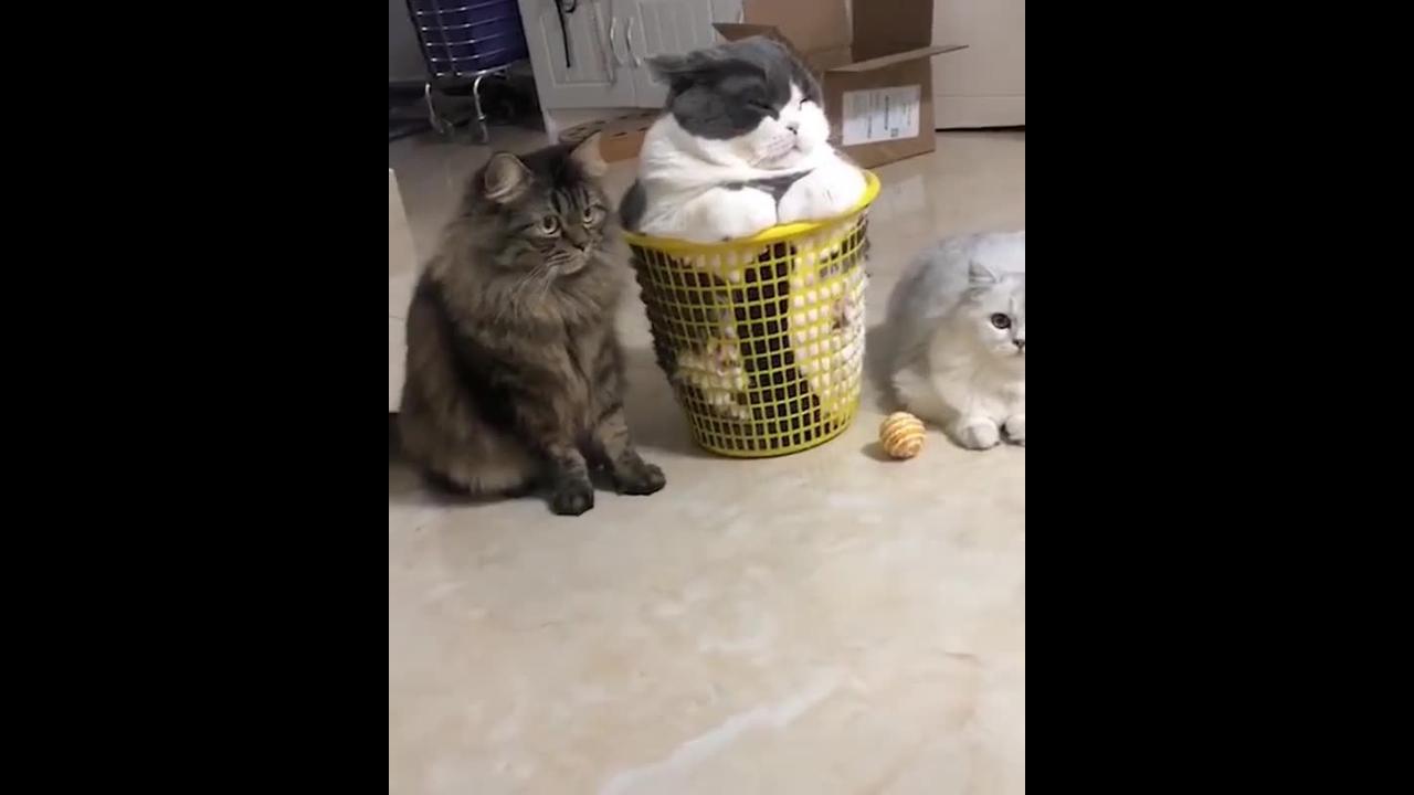 Três gatinhos fofos