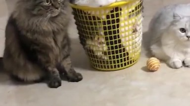 Três Gatinhos Fofos, Olha Só A Carinha Deste Que Esta Dentro Da Cesta, Hahaha!