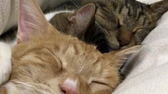 Três Gatinhos No Soninho Mais Profundo, Confira A Fofura!