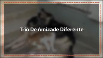 Trio De Amizade Mais Improvável No Mundo Dos Animais, Confira!