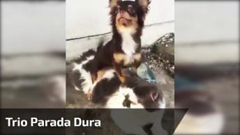 Trio Parada Dura, Animais Sempre Nos Surpreendendo, Que Fofinhos!