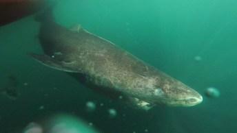 Tubarão Filmado Por Homem Em Bote, Olha Só Como Ele Passou Perto!