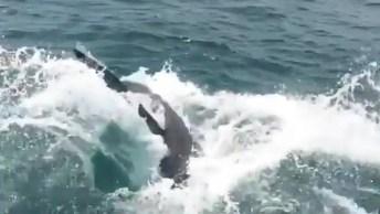 Tubarão Tenta Pegar Isca De Pescador No Mar, Olha Só Que Imagem Incrível!