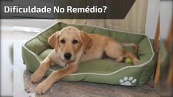 Tutorial De Como Fazer Seu Cachorro Tomar, Remédio, Olha Só A Carinha Dele!