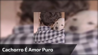 'Um Cachorro Não Se Importa Com O Valor Do Seu Salário' De Braulio Bessa!