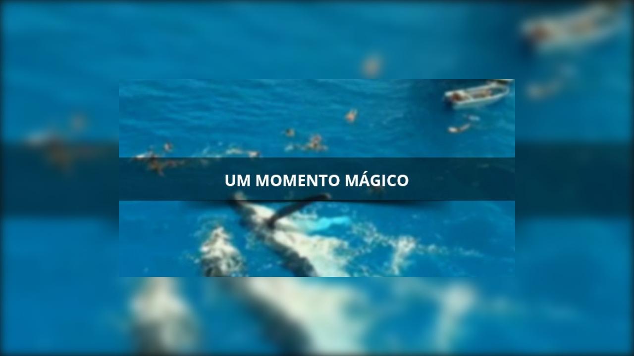 Um momento magico para estes turistas que nadaram com uma baleia em auto mar
