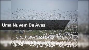 Uma Nuvem De Aves, Esse Vídeo Chama A Atenção Pela Quantidade De Animais!