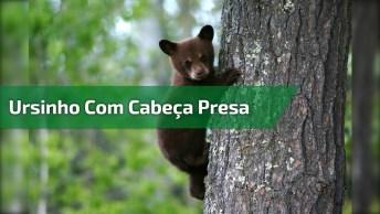 Ursinho Fica Com Pote Preso Na Cabeça E Precisa De Um Trator Para Ajudá-Lo!