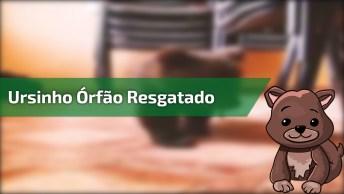 Ursinho Órfão Resgatado É Muito Fofo, Vale A Pena Ver Esse Vídeo.