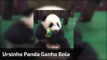 Ursinho Panda Ganha Bola E Fica Super Feliz, Parece Uma Criança!