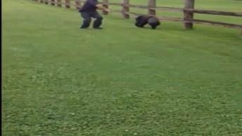 Urso Curioso Ficou Com A Cabeça Entalada Em Um Balde, Confira O Que Aconteceu!