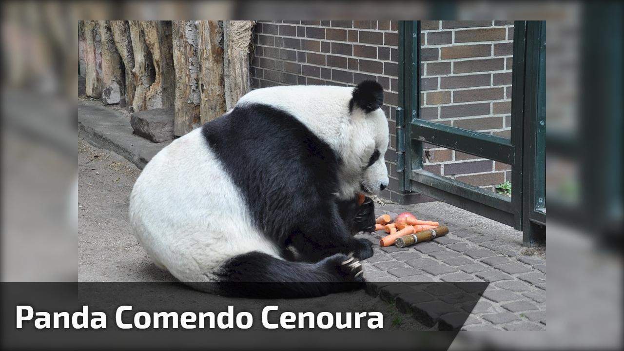 Panda comendo cenoura