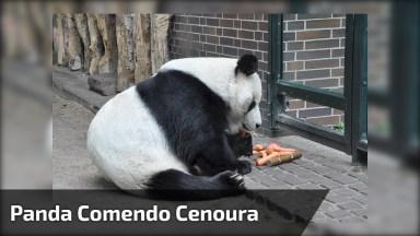 Urso Panda Comendo Um Vegetal, Este Animal É Apaixonando, Olha Essa Carinha!