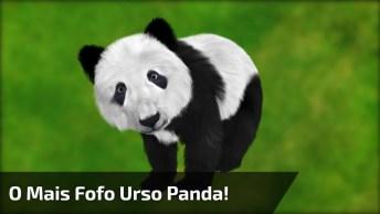 Urso Panda O Animal Mais Fofo Que Existe Na Face Da Terra!