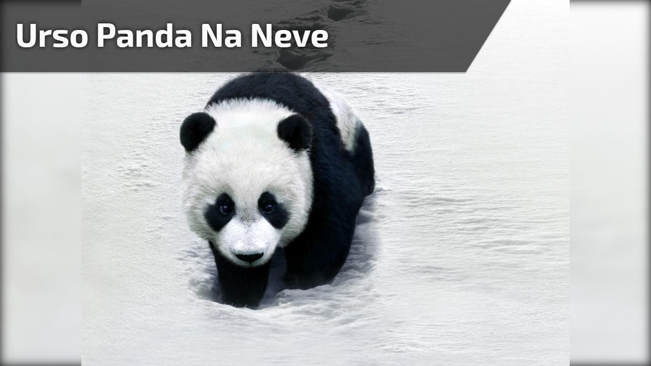 Urso panda na neve
