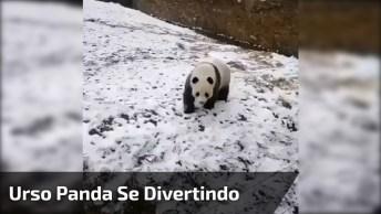 Urso Panda Se Divertindo Em Barranco Coberto De Neve, Que Coisinha Mais Fofa!