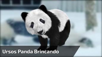 Ursos Panda Brincando Entre Si Na Neve, Como Eles São Fofinhos!