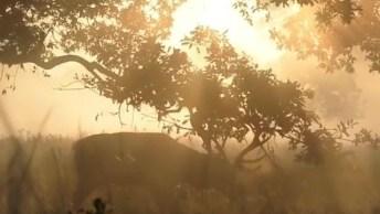 Veado Quebrando Galho De Árvore, Veja Que Imagem Incrível!