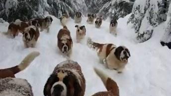 Veja Bolas De Pelos Na Neve, Umas Fofuras Para Postar No Facebook!