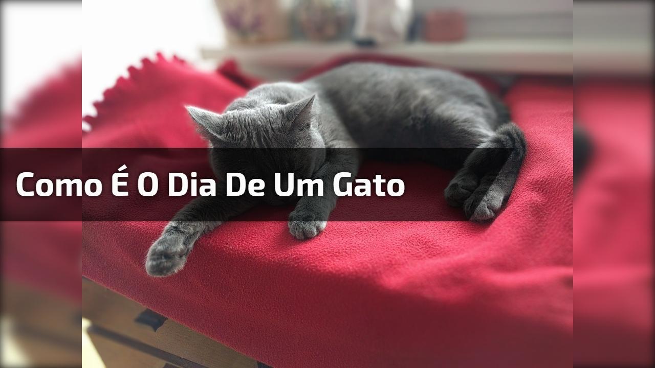 Como é o dia de um gato
