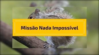 Veja Essa Missão Nada Impossível Para Esse Esquilo Super Inteligente!