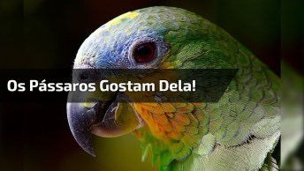 Veja O Que Acontece Quando Os Pássaros São Tratados Com Muito Amor!