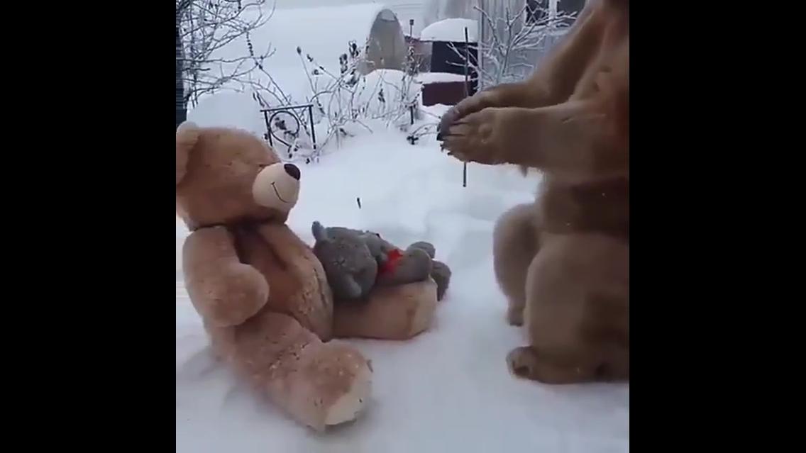 Veja o que acontece quando um urso de verdade encontra ursos de pelúcia