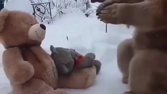 Veja O Que Acontece Quando Um Urso De Verdade Encontra Ursos De Pelúcia!