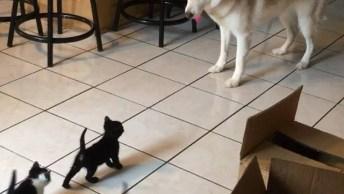 Veja O Que Esse Cachorro Faz Com Esses Filhotes De Gatos, Surpreendente!