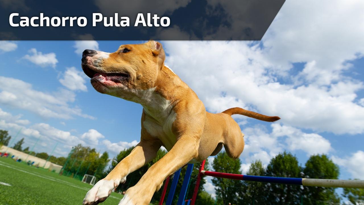 Cachorro pula alto