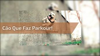 Veja Que Incrível Este Cão Que Faz Parkour, Kkk! Muito Legal!