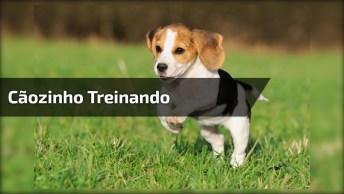 Veja Só Este Pequeno Cãozinho Treinando Para Ficar Forte, É Muito Fofo!