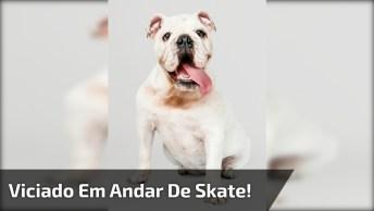 Veja Só Este Vídeo De Um Cachorro Que É Viciado Em Andar De Skate!