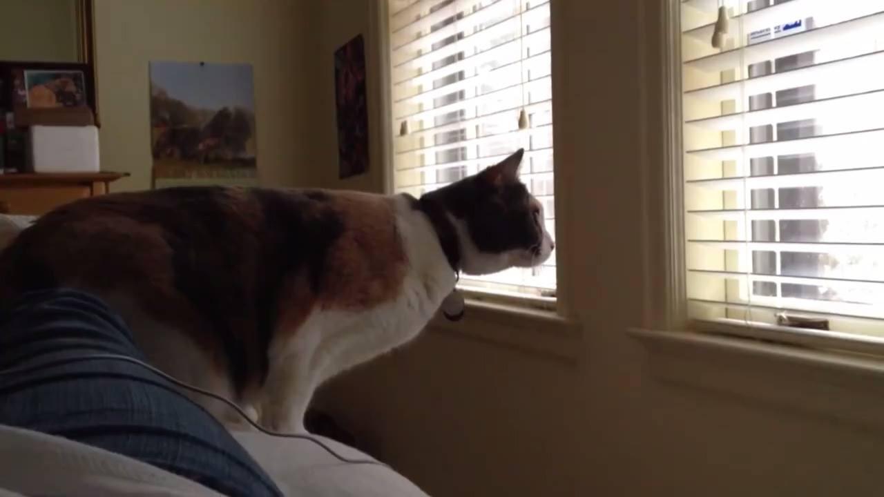 Veja só estes vídeo de gatinhos! Sempre soube que gatos são de humanas, kkk!