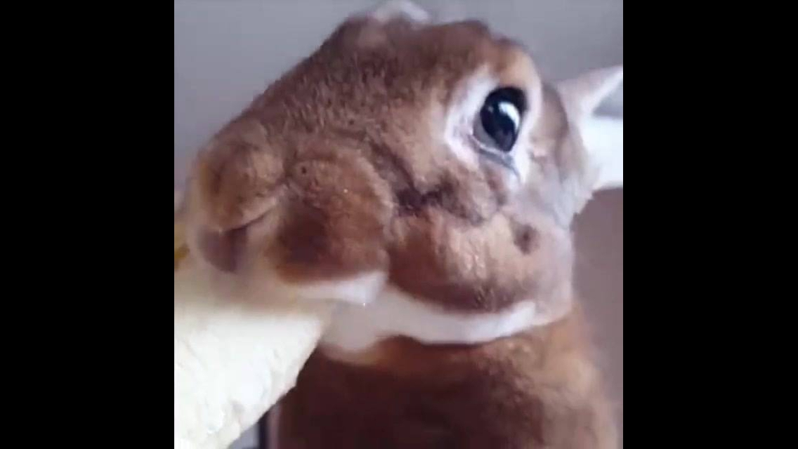 Veja só que coelhinho mais fofinho comendo