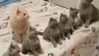 Víde Para Quem Gosta De Gatinhos, Olha Só Estas Fofuras De Filhotes!