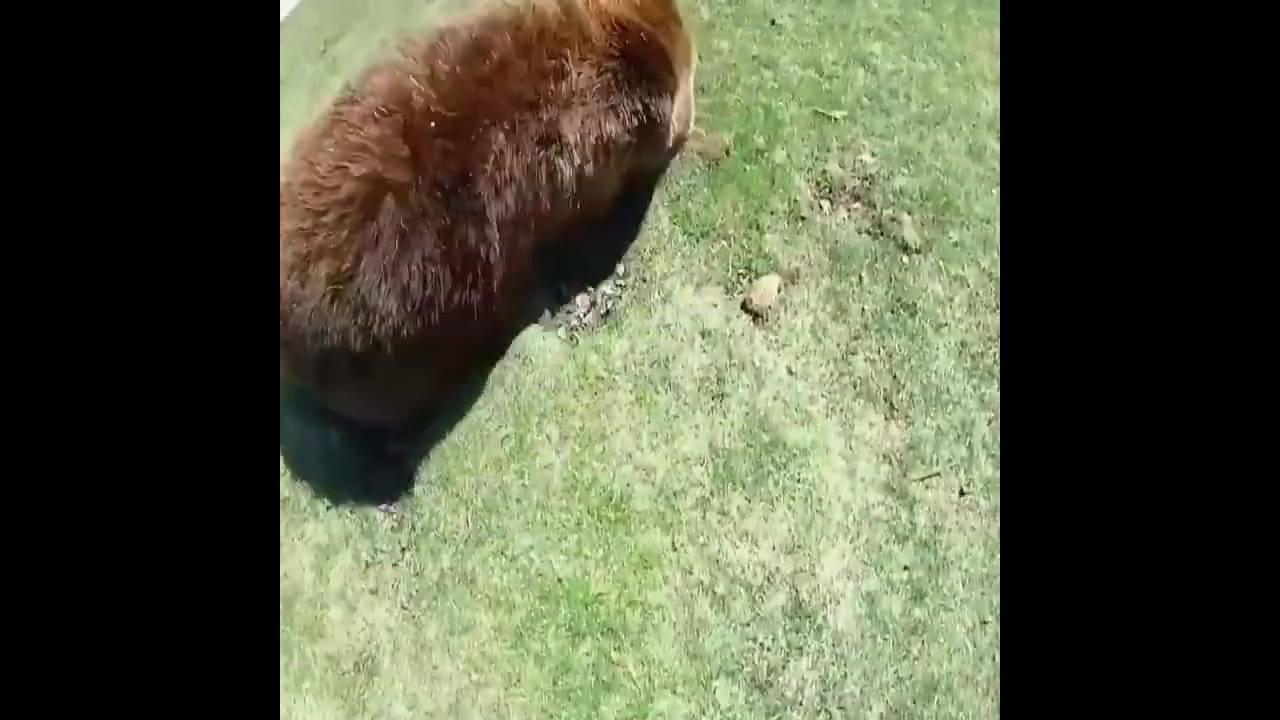 Vídeo com amizades de homens e animais selvagens, simplesmente magnifico!