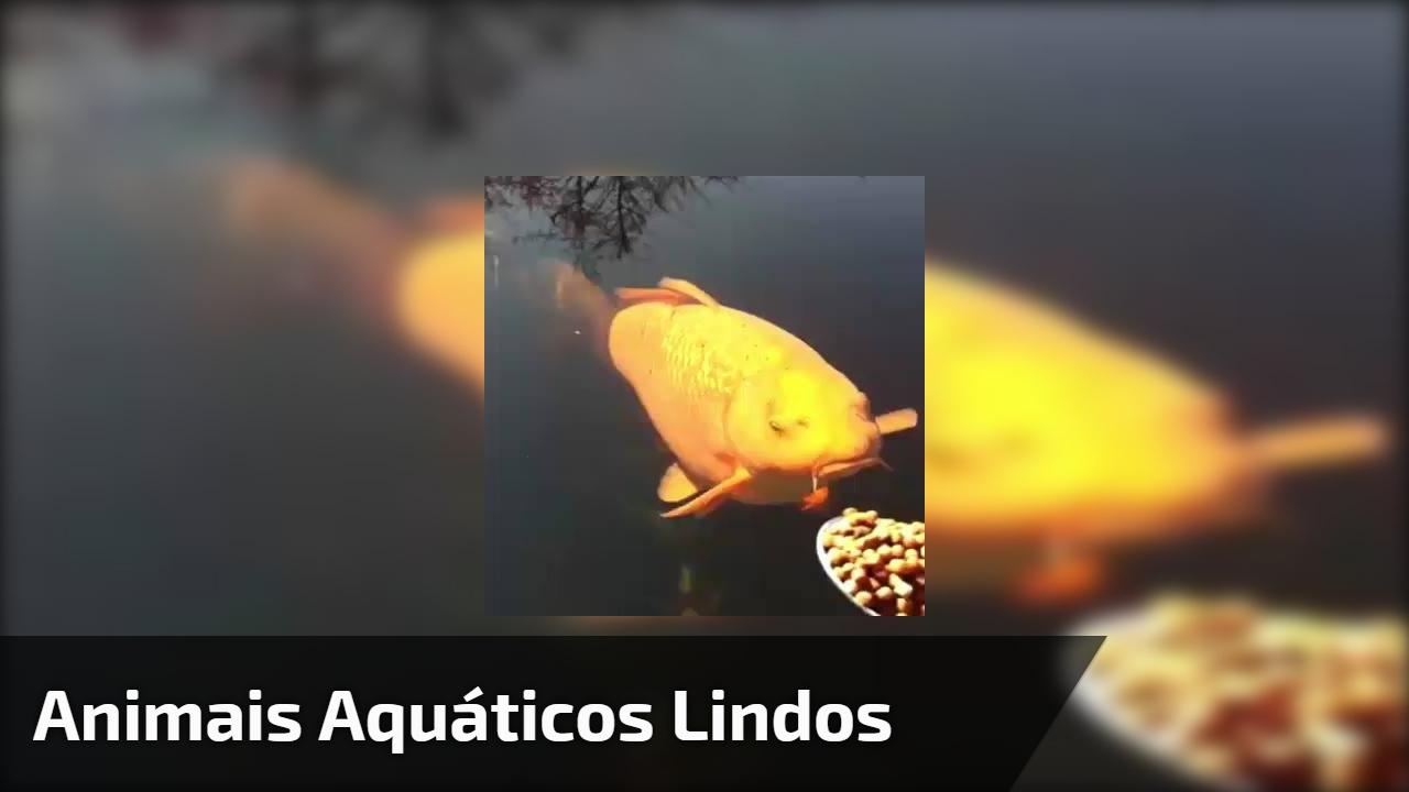 Animais aquáticos lindos