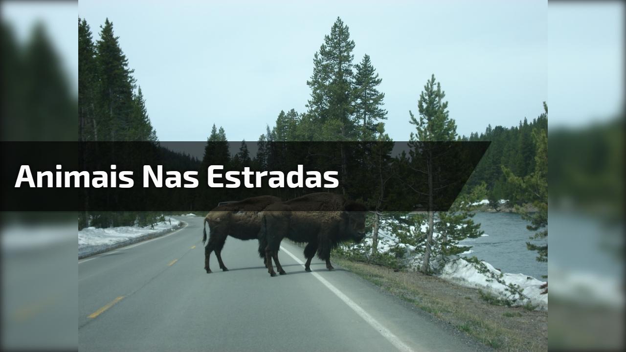 Animais nas estradas