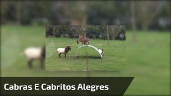 Vídeo Com As Cabras E Cabritos Mais Alegres Que Você Já Viu!