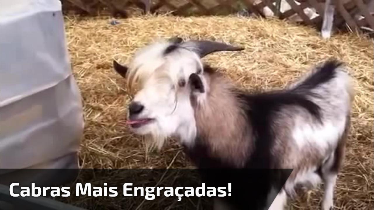 Cabras mais engraçadas!