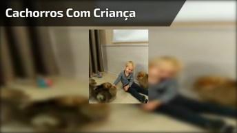 Video Com Ataque De Fofura, Essas Bolinhas De Pelo Com A Criança São Muito Fofos