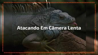 Vídeo Com Ataque De Lagarto, Olha Só Que Susto Este Câmera Deve Ter Levado!