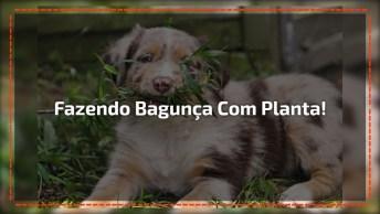 Vídeo Com Cachorrinho Fazendo Uma Bagunça Na Plantinha De Sua Dona!