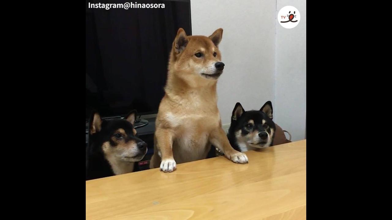 Vídeo com cachorrinhos comendo algo muito gostoso