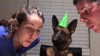 Vídeo Com Cachorro Fazendo Aniversário, Olha Só A Carinha Dele!