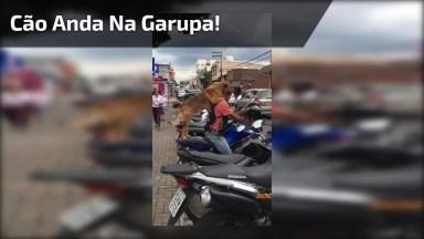 Vídeo Com Cachorro Que Anda Na Garupa Da Moto De Seu Dono!