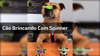 Vídeo Com Cãozinho Brincando Com Spinner, Olha Só A Carinha Dele, Hahaha!